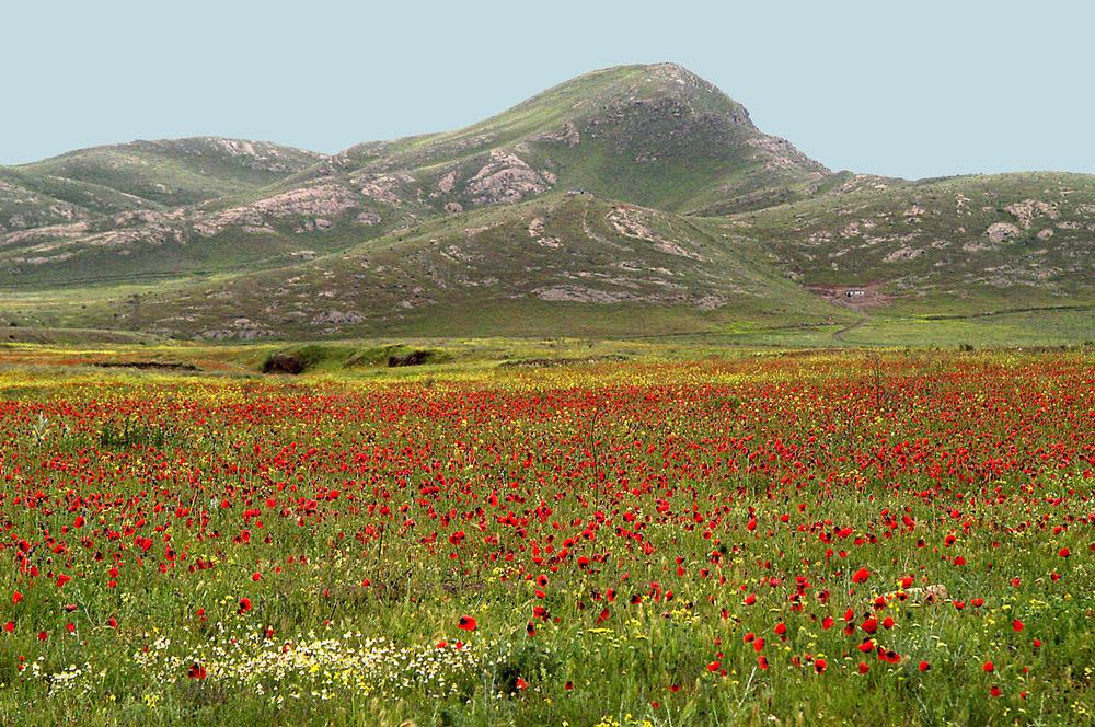 web-klaprozen-armenie-jpg