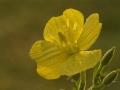 bloem-1000-jpg