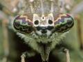 ogen-regendaas-1000-jpg