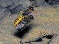 vliegende-bijen-1000-jpg