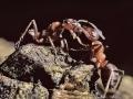 web-mieren-voeren-elkaar-jpg