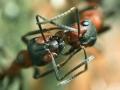 web-rode-bosmieren-voeren-elkaar_filtered-jpg