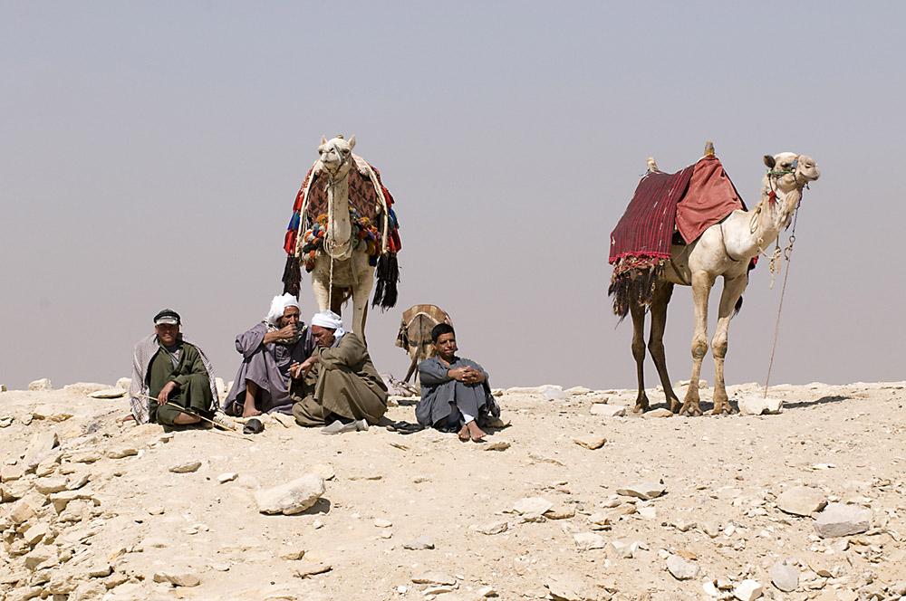 kameldrijvers-jpg