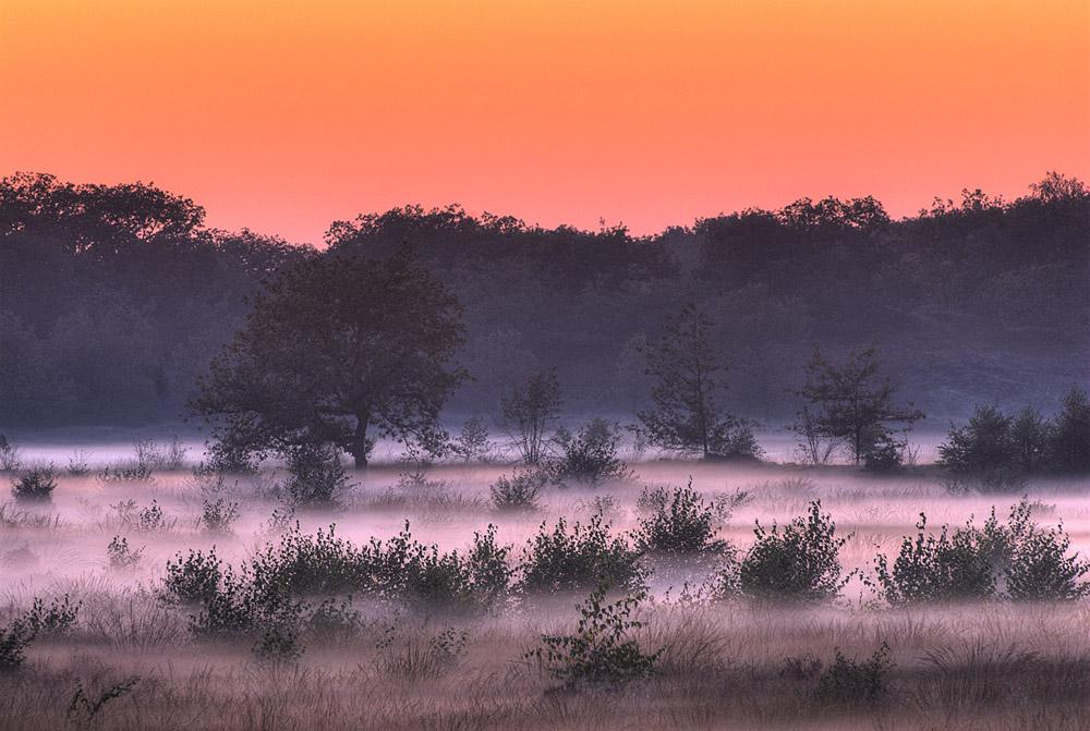 mist-loonse-duinen-bij-avond-jpg