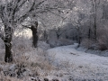 011-bospad-steenwijkerwold-jpg