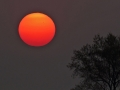 rode-zon-web-jpg