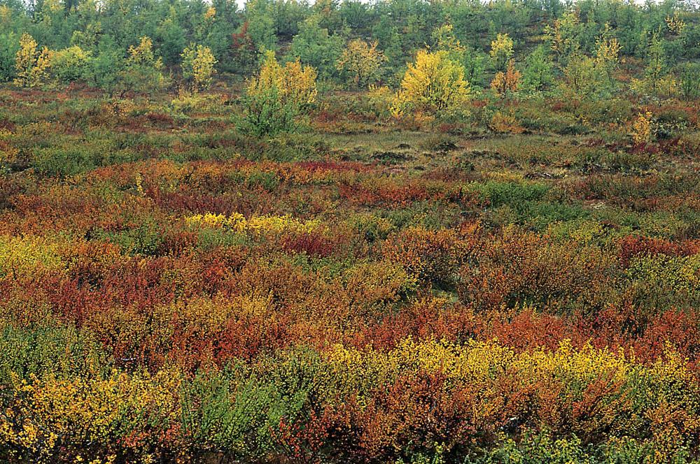 herfst-kleur-jpg