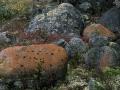 oranje-algen-jpg