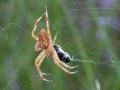 spin met prooi 1000