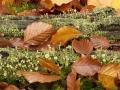 bekermos-stapelfoto-1000-jpg