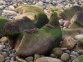 stenen-kust-2-web-jpg