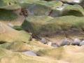 stenen-kust-web-jpg