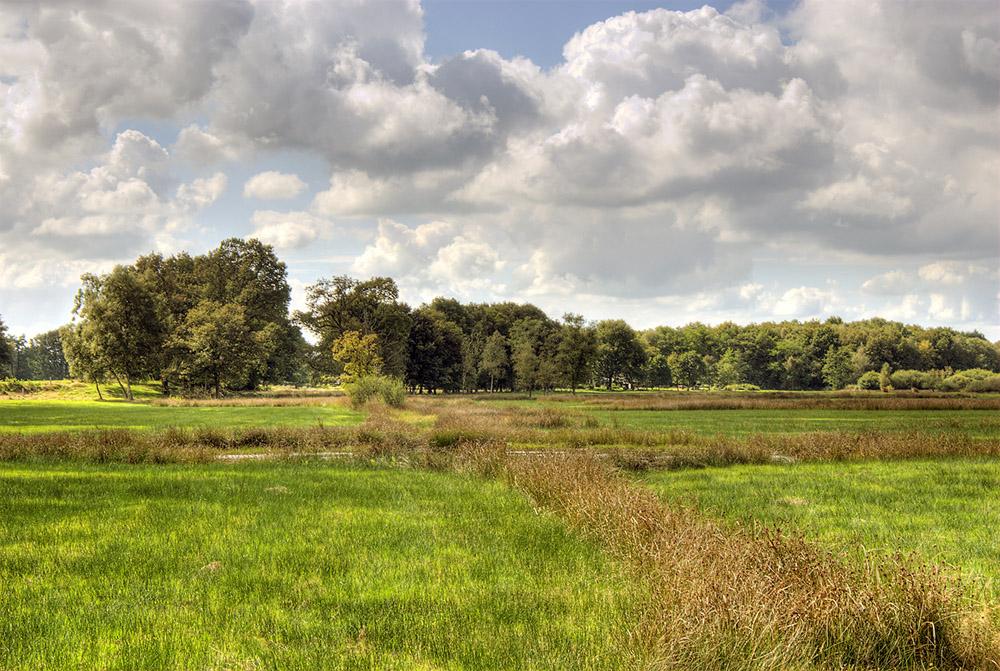 landschap reest 1 1000