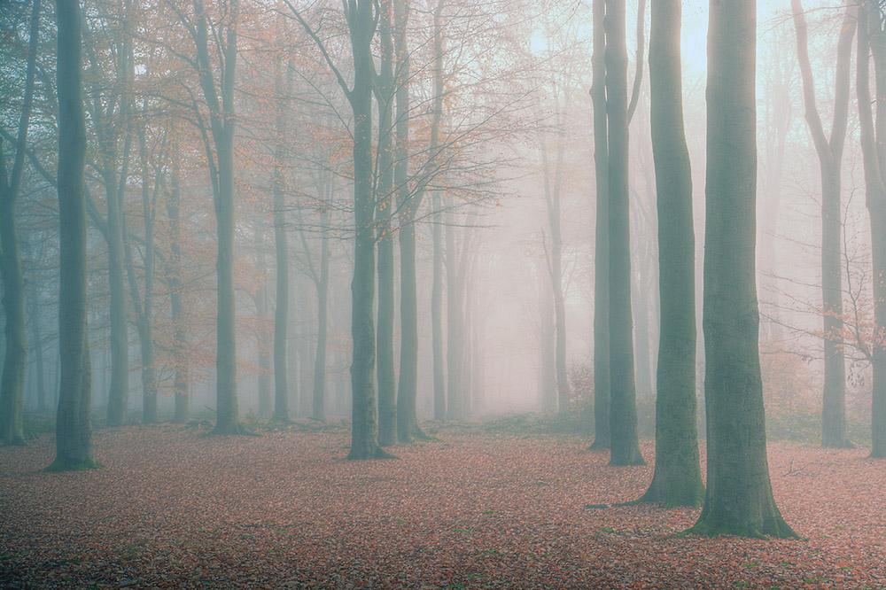 bomen mist 1000