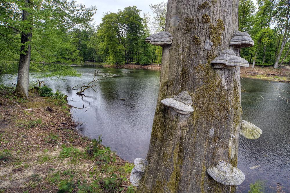 boom met tonderzwammen 1000