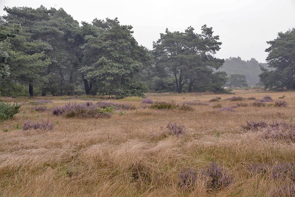 Westerzand