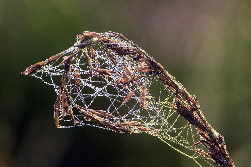 gras gevangen door spinnenweb