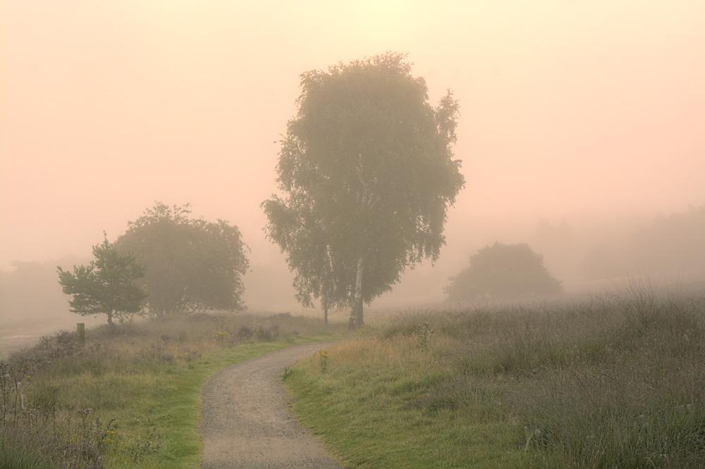 mist over fietspad