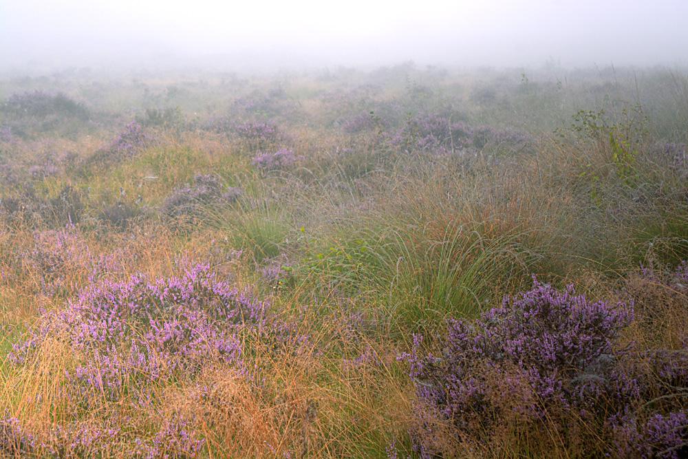 mist over de Heide