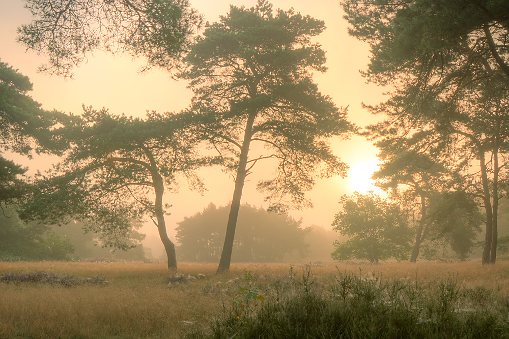 Bomen Holtingerzand in de mist