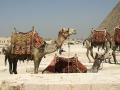 kamelen-jpg
