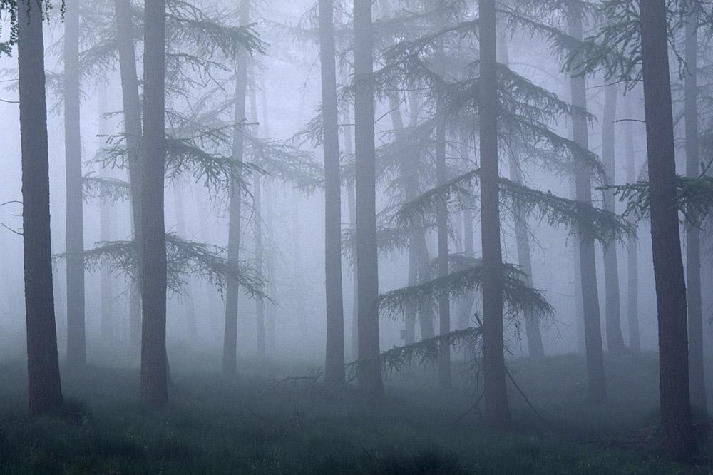 mist-in-bos-web-jpg
