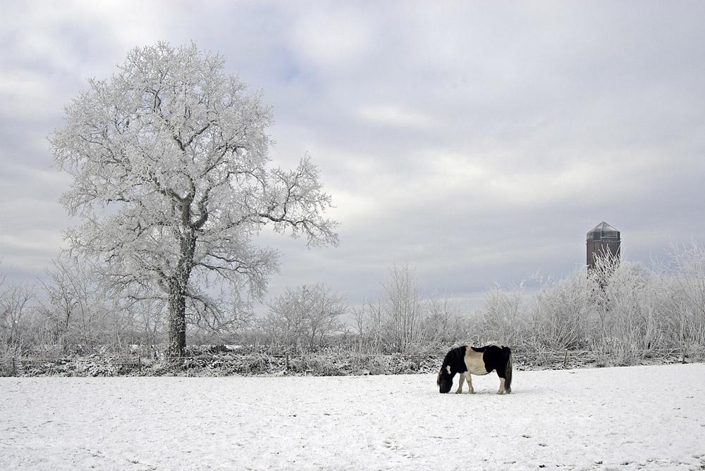 ponny-in-de-sneeuw-jpg