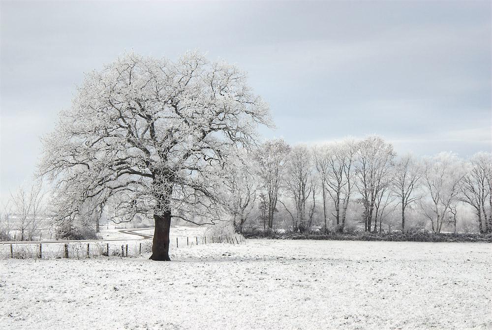 thijlingerhof-winterse-boom-jpg