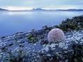 zee-egel-jpg