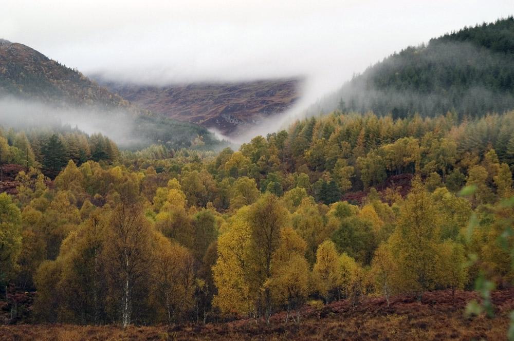 nevel-boven-bos-web-jpg