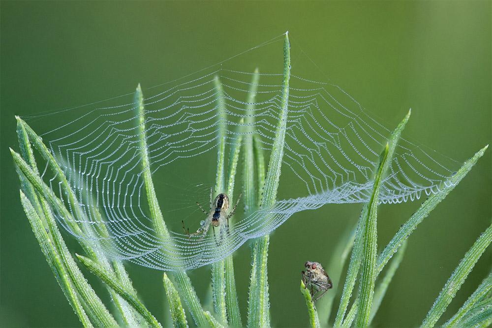 166-spinweb-1000-jpg