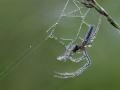 web-strekspin-1000-jpg