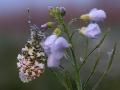 bloeiend_gras_20120502_1639833340-jpg