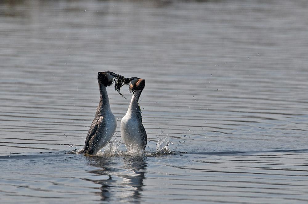 043-pinguindans-futen-web-jpg