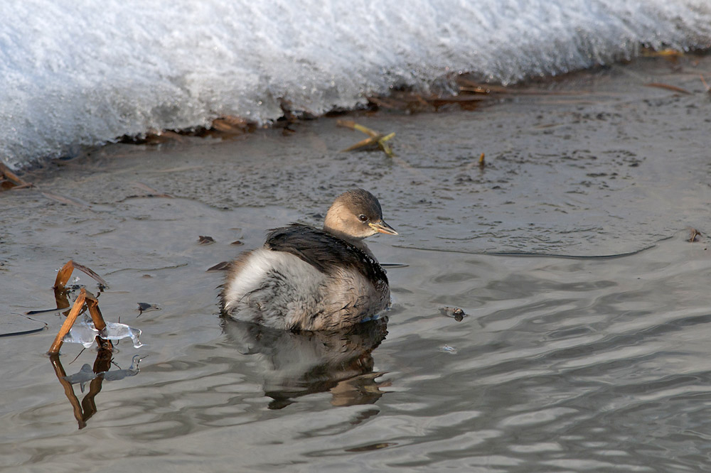 107-dodaars-winter-web-jpg